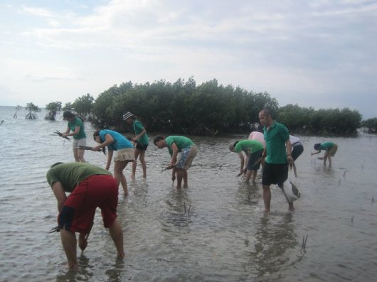 Calatagan Mangroves CSR Tree Planting